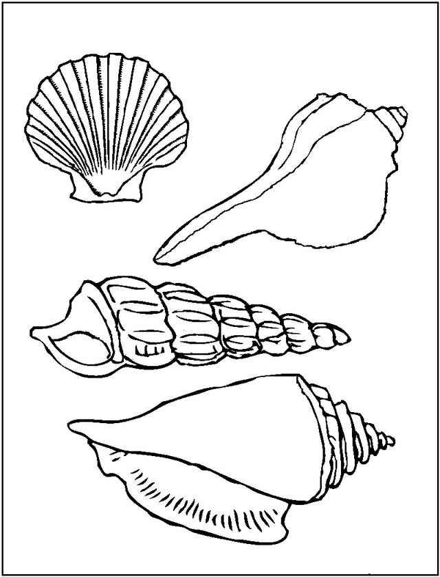 various seashell coloring page