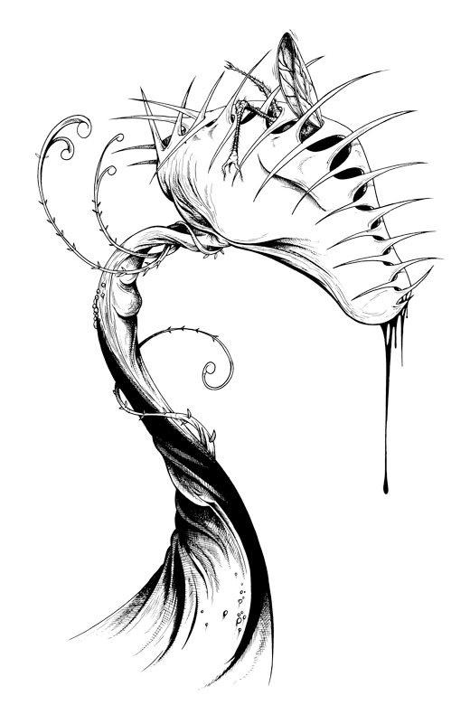 venus flytrap dionaea muscipula coloring picture