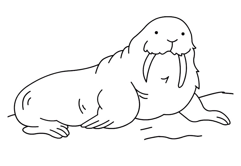 walrus marine mammals coloring sheet