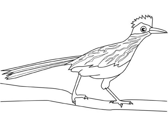 chaparral cock road runner coloring sheet