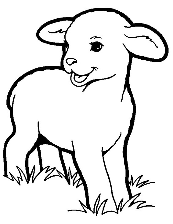 lamb coloring pictures a young sheep coloring sheet