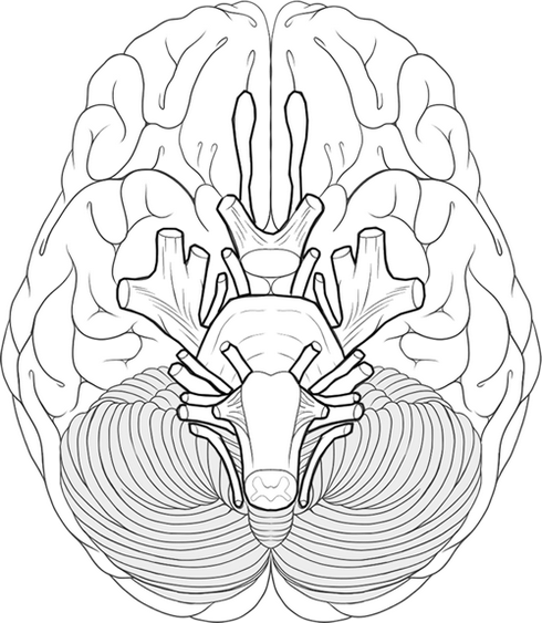 Educational brain system works coloring sheet