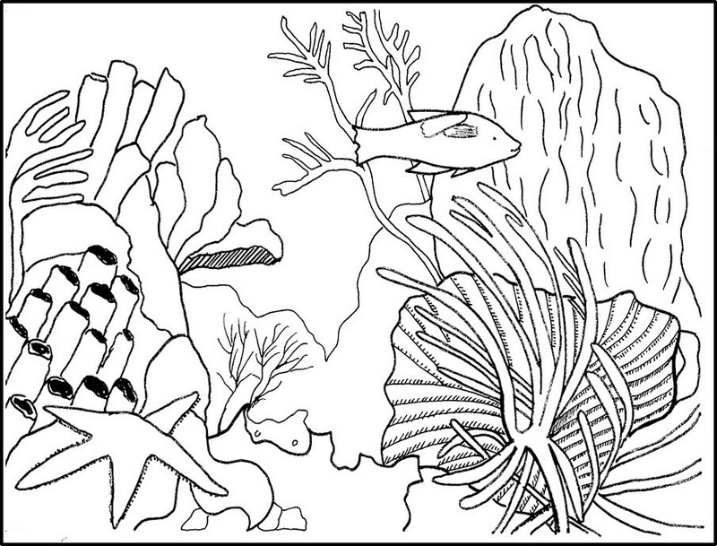 best coral reefs coloring page