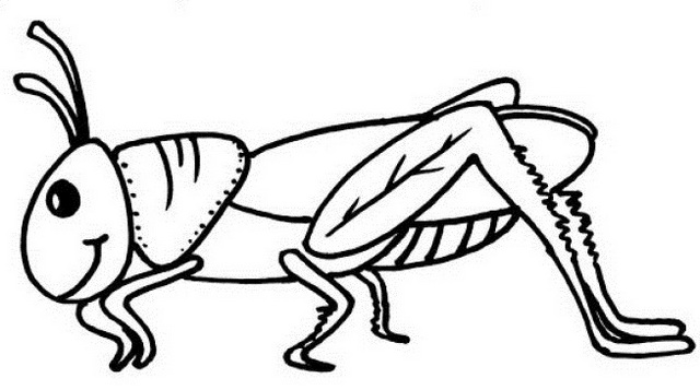 cute and unique grasshopper coloring page for small children