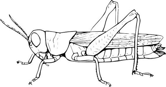 fun grasshopper coloring and drawing sheet