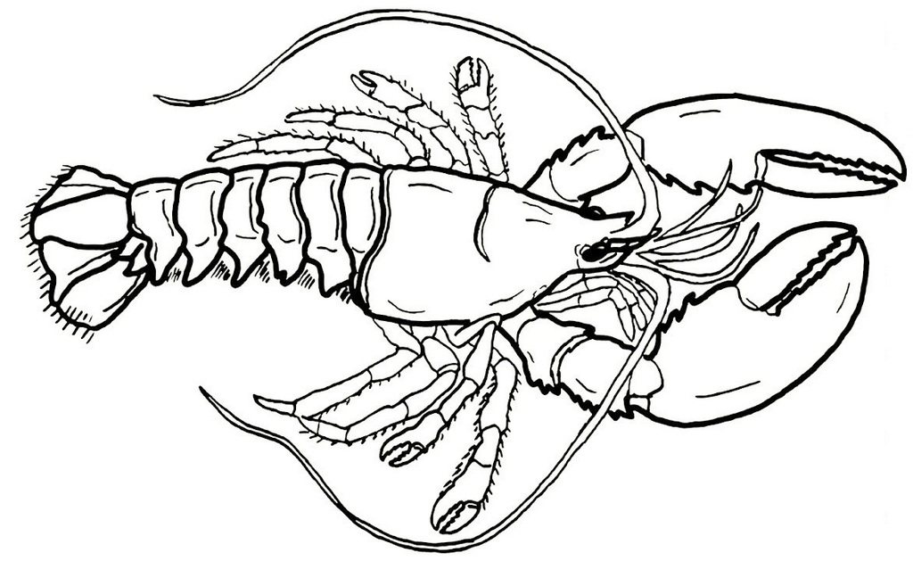 giant lobster coloring sheet for little kids