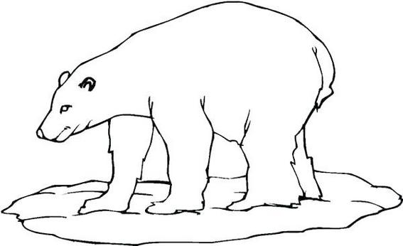 new polar bear coloring page for children