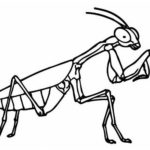perfect grasshopper coloring page design
