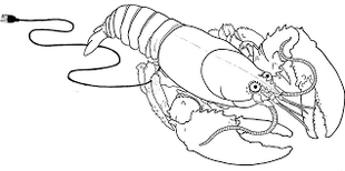 pretty awesome lobster coloring printable page
