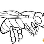 Fantastic Honey Bee Coloring Page
