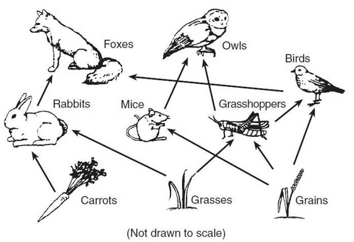 food web biology diagram coloring page
