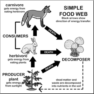 simple food web diagram coloring picture