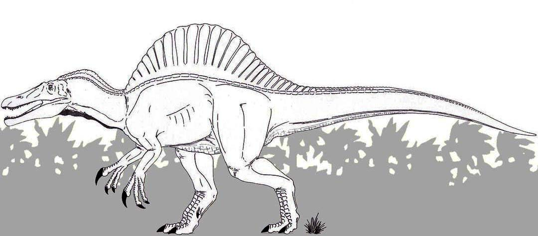 Best Spinosaurus coloring page