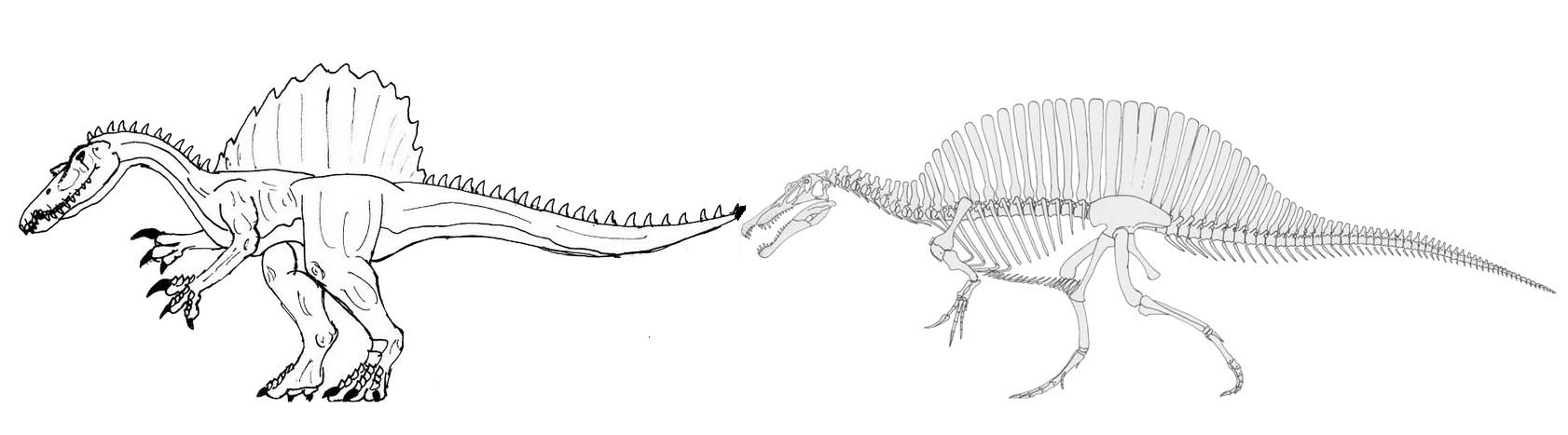 Spinosaurus skeleton coloring and drawing page