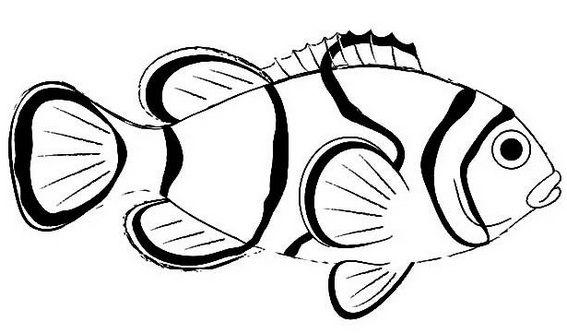 printable clownfish coloring page for kids