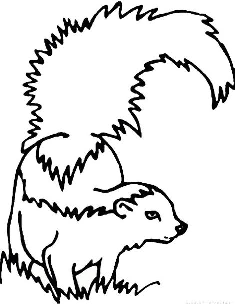 realistic skunk coloring page