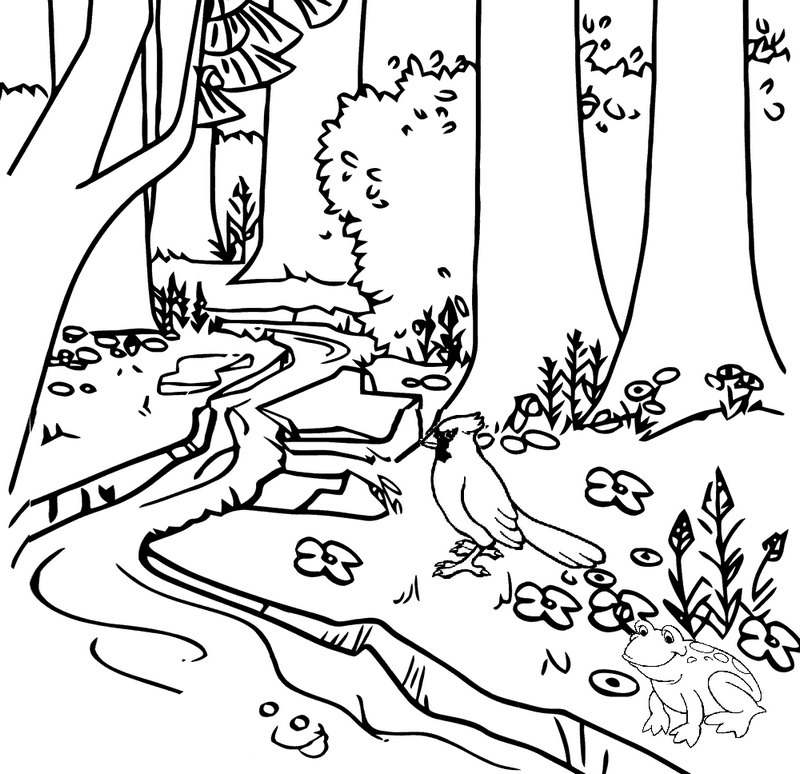river forest coloring page