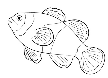 simple clown fish coloring page for toddlers