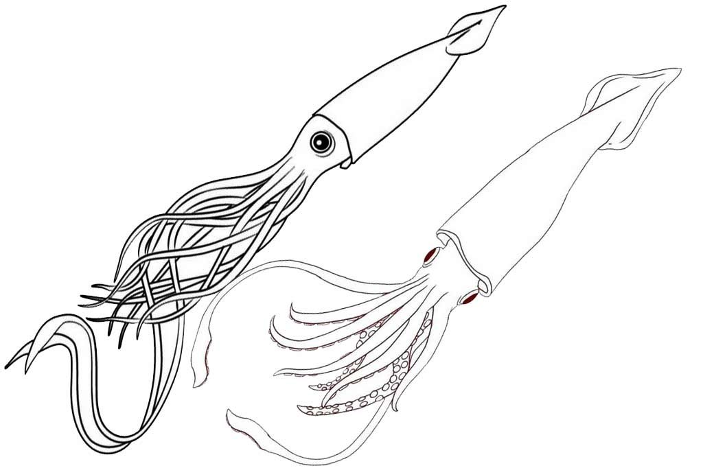 two squids coloring page