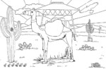 9 Fascinating Camel Coloring Pages for Children