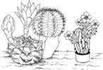 10 Fun Cactus Coloring Pages for Kids: Facts and Adaptations