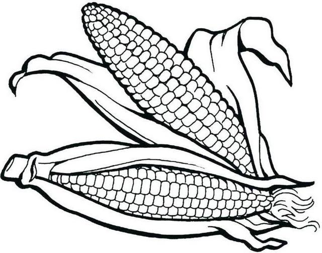 two corns coloring pages printable