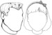 Kid's Face Coloring Pages to Learn About Their Facial Features