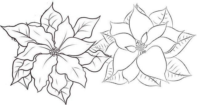Poinsettia Christmas Flower Coloring Page 1