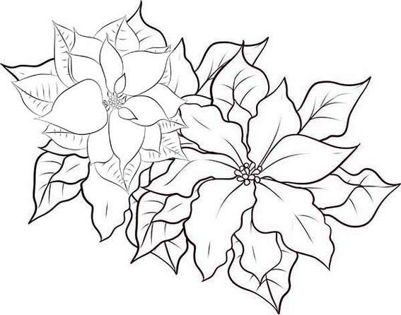 Poinsettia the Christmas Star Coloring Page