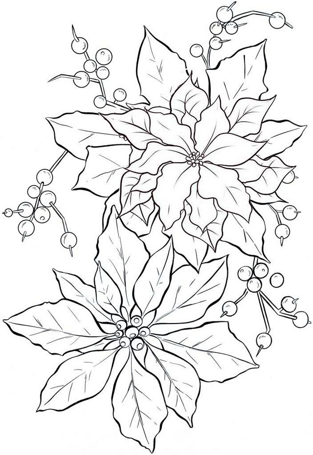 best poinsettia flower plant coloring page