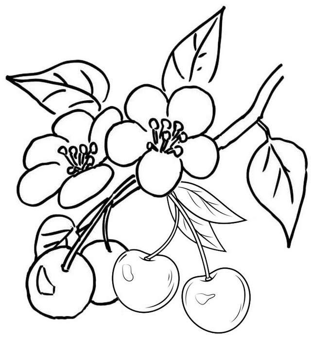 fun cherries coloring printable page