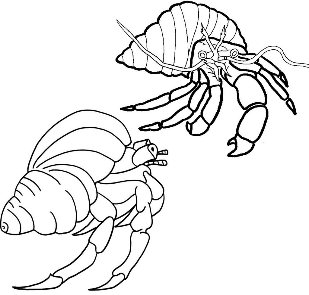hermit crab fighting coloring page