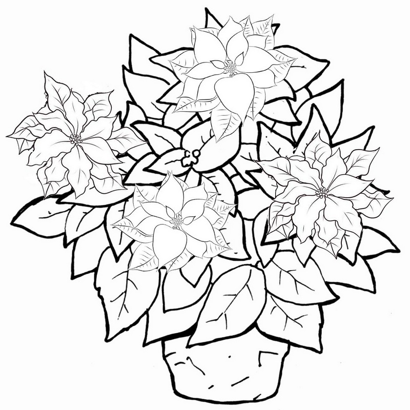 poinsettia plant in pot coloring page