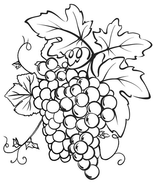 Grape Coloring Page to teaching kids about various fruits