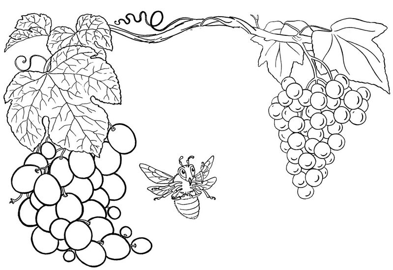 Learn Color with Grape Coloring Page for Kids