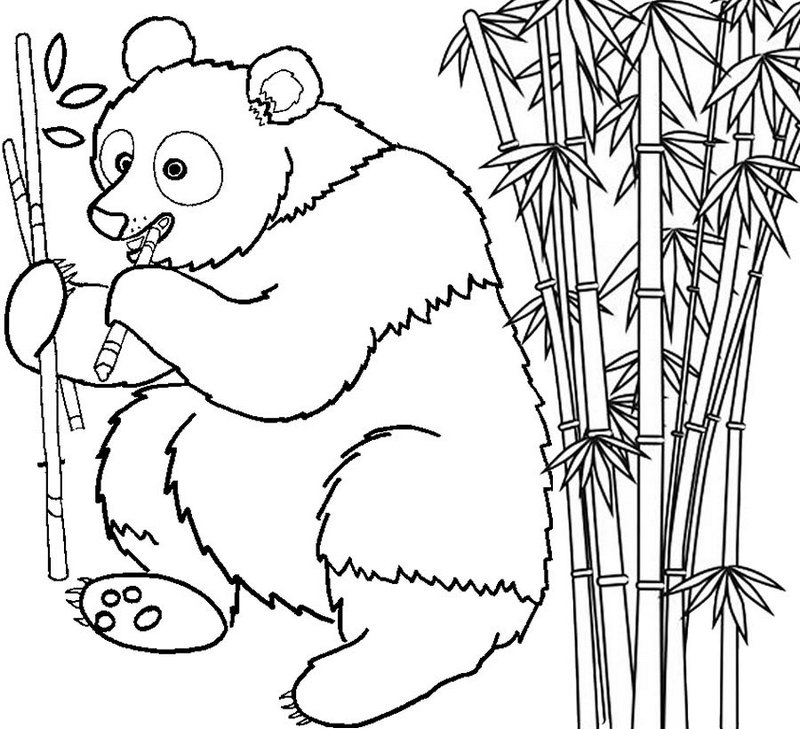 Panda eating Bamboo Coloring Page