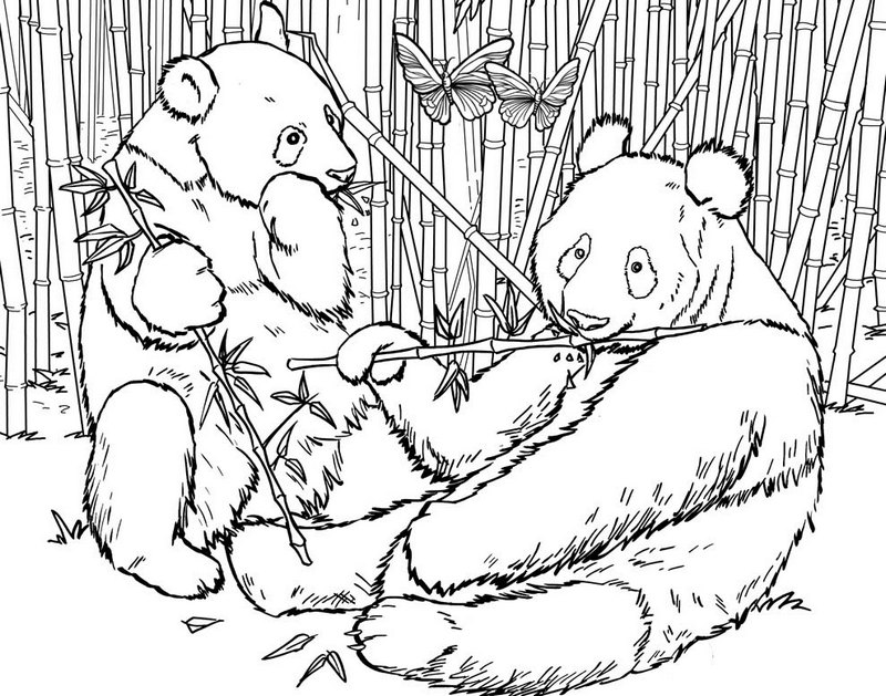 panda habitat bamboo coloring pages