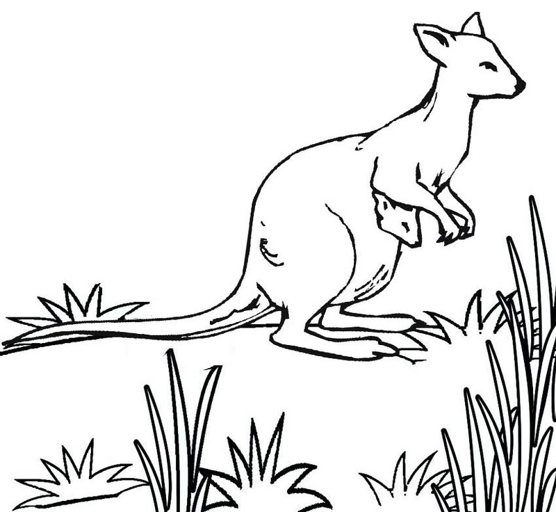 Australian kangaroo coloring pages
