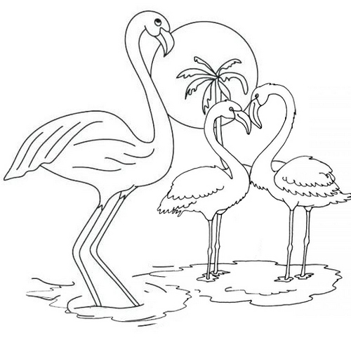 Beautiful flamingo coloring pages