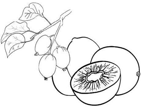 Kiwi plant coloring page