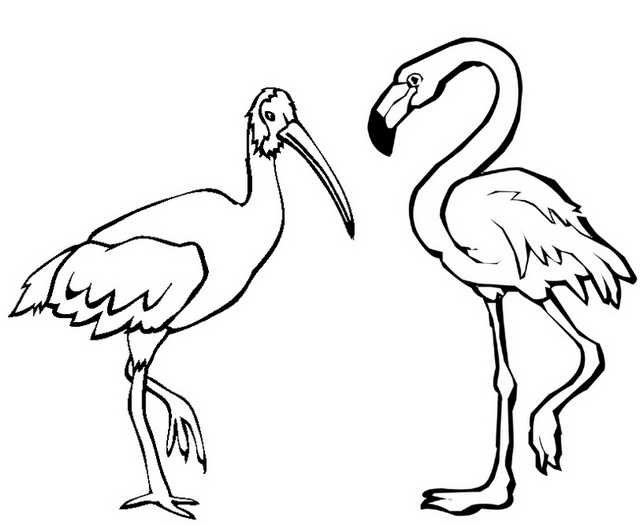Pink Flamingo Coloring Page for Kids