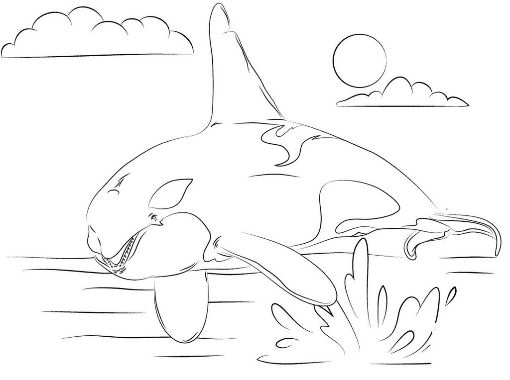 best killer whale coloring page