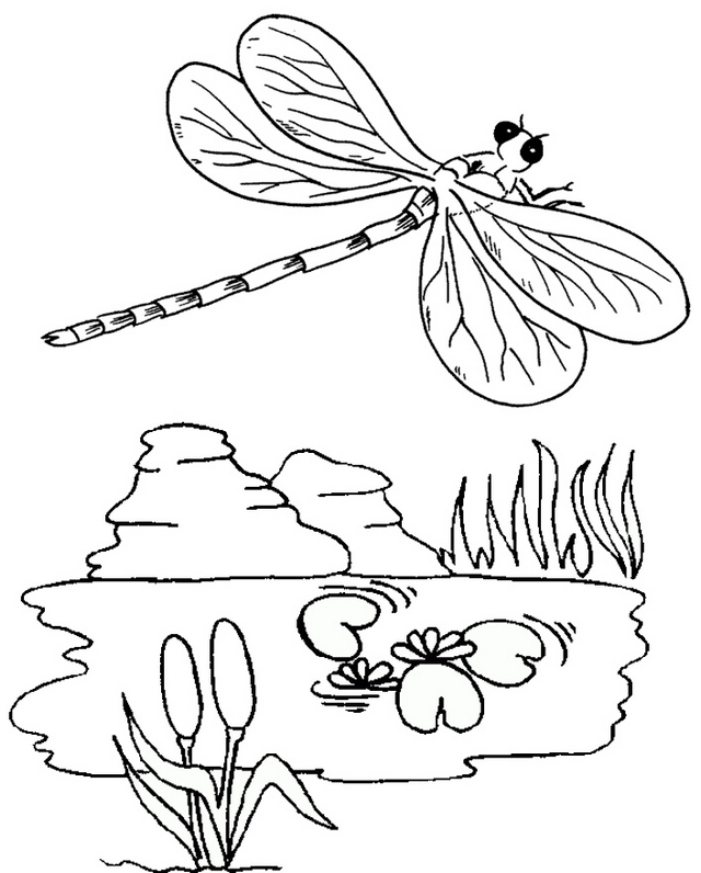 dragonfly coloring and drawing page