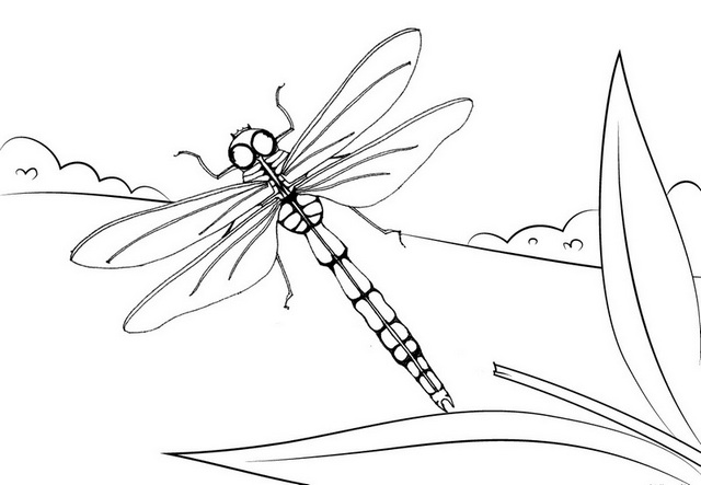 dragonfly in the garden coloring page
