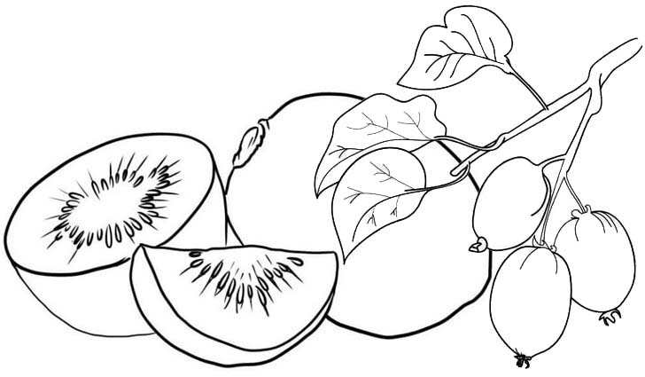 healthy kiwi fruit coloring page