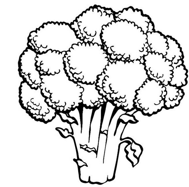 original realistic vegetable broccoli coloring pages
