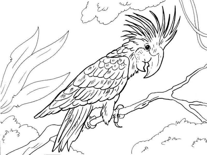 Beautiful Macaw Coloring Page