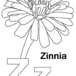Letter Z for Zinnia Coloring Page