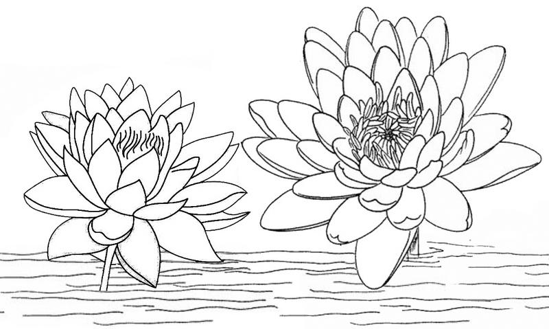 Lotus on the lake water coloring page
