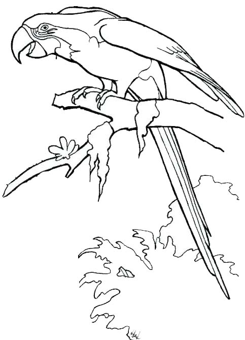 Macaw Bird Coloring Page for Kids